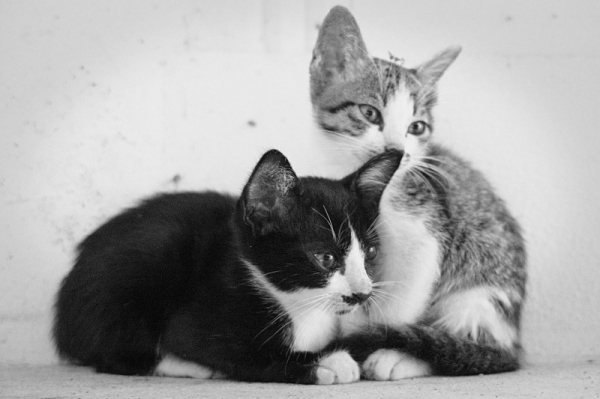 kitten postcard?!