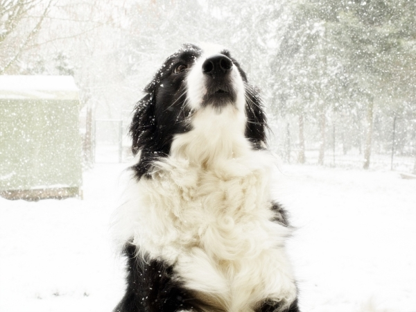 i love snow, you know?!