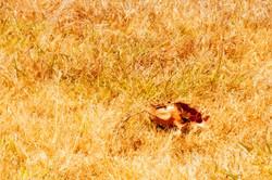 Summer Grass in Texas