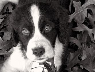 Cooper 3