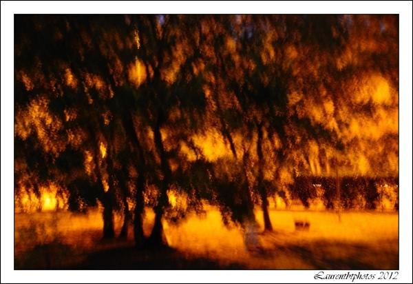 Impressionnisme, arbres