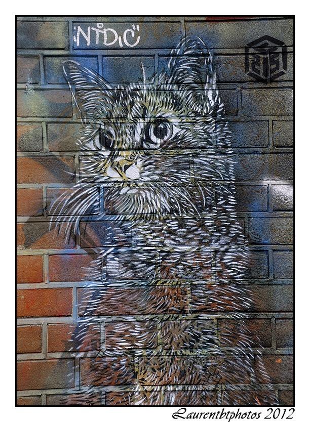 Un chat par l'artiste C215