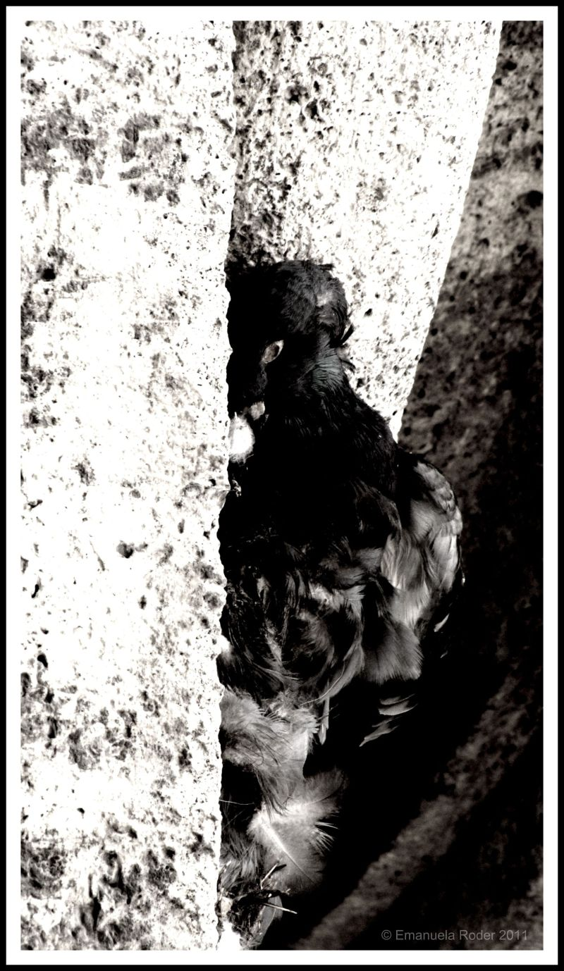 Death and a Pigeon