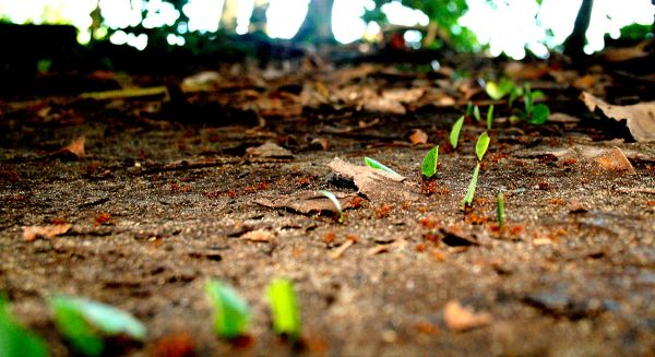Ants. Costa Rica