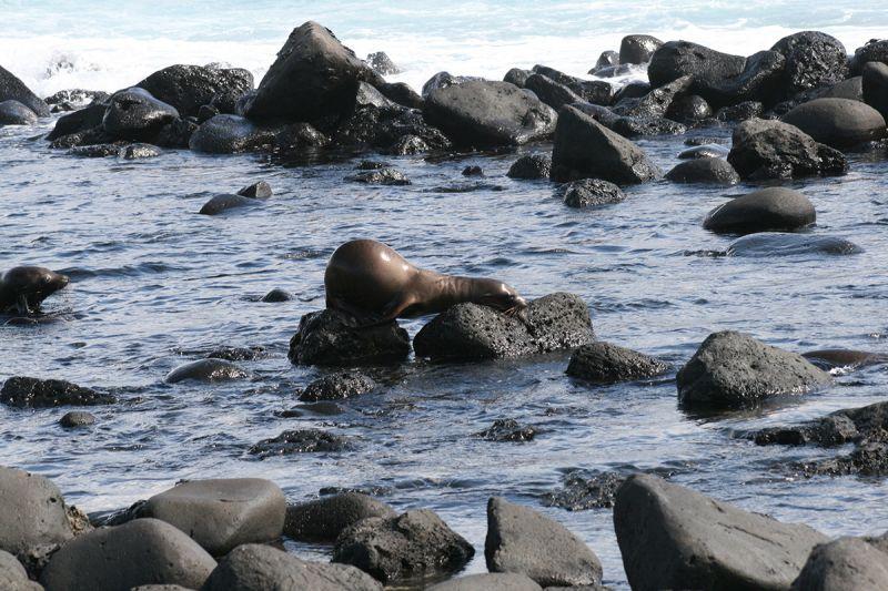Seals, Galapogas island, Ecudor