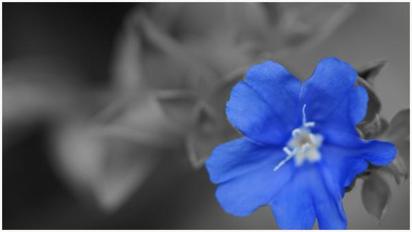 Blue Idea