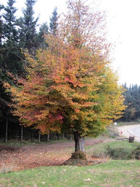 spring in behshahr- pasan-rez jongel(forest)