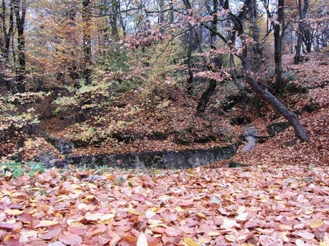 spring in behshahr- pasand-rez jongel(forest)