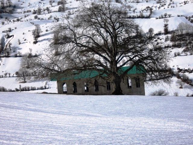 Shrine and the tree امامزاده و تک درخت  (هزارجریب