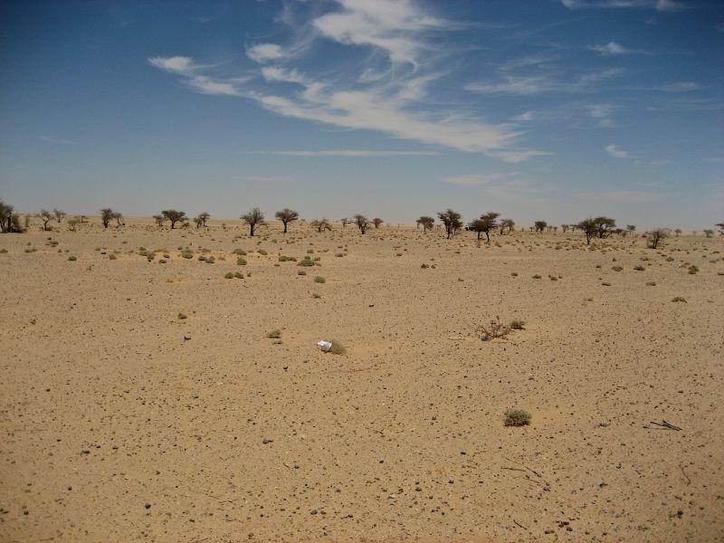 Sahara #7