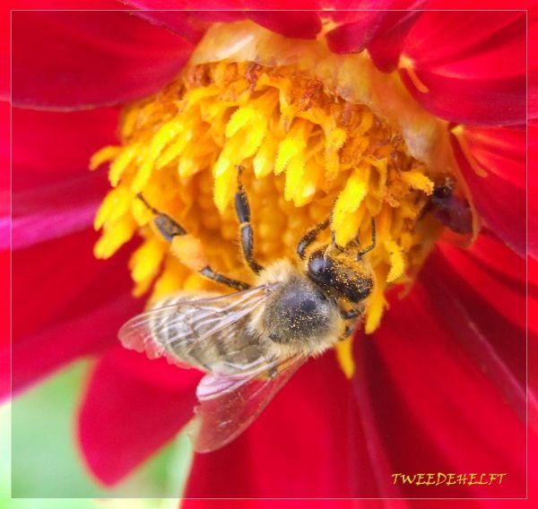 insecten, hangplek, hogere sferen