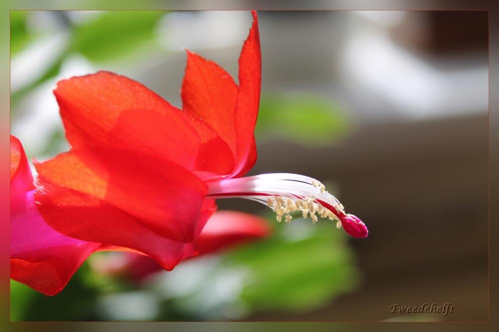 close up lidcactus