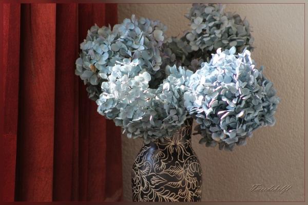 Gedroogde hortensia bij gordijn