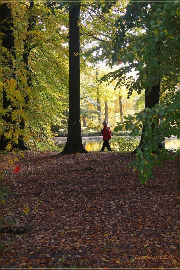 bossen en vijverpartijen