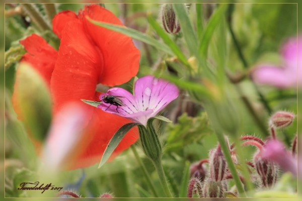 gewone vlieg op wilde bloemen