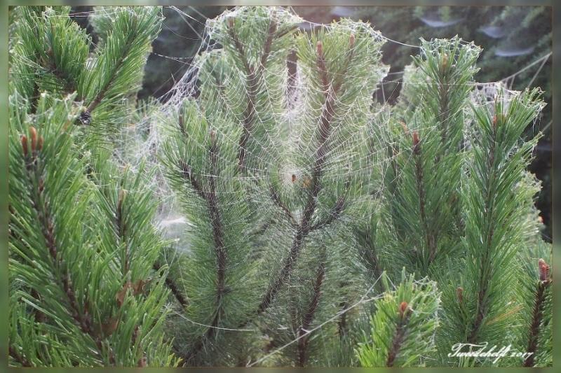 spinnenweb op struiken