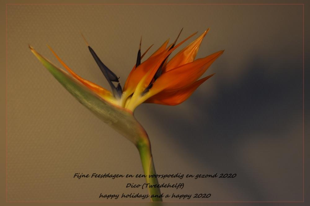 bloem paradijsvogelplant