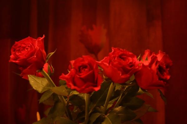 bos rozen met gordijn er achter in dezelfde stijl