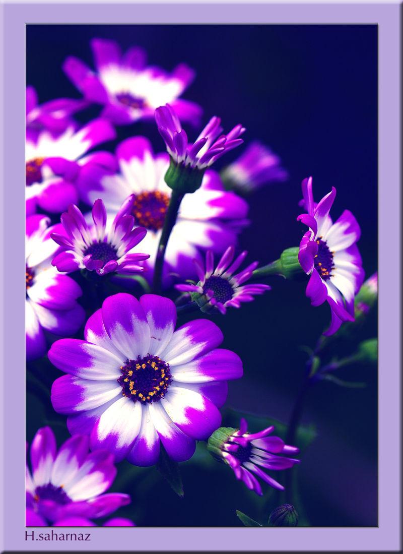 Cinere Flower