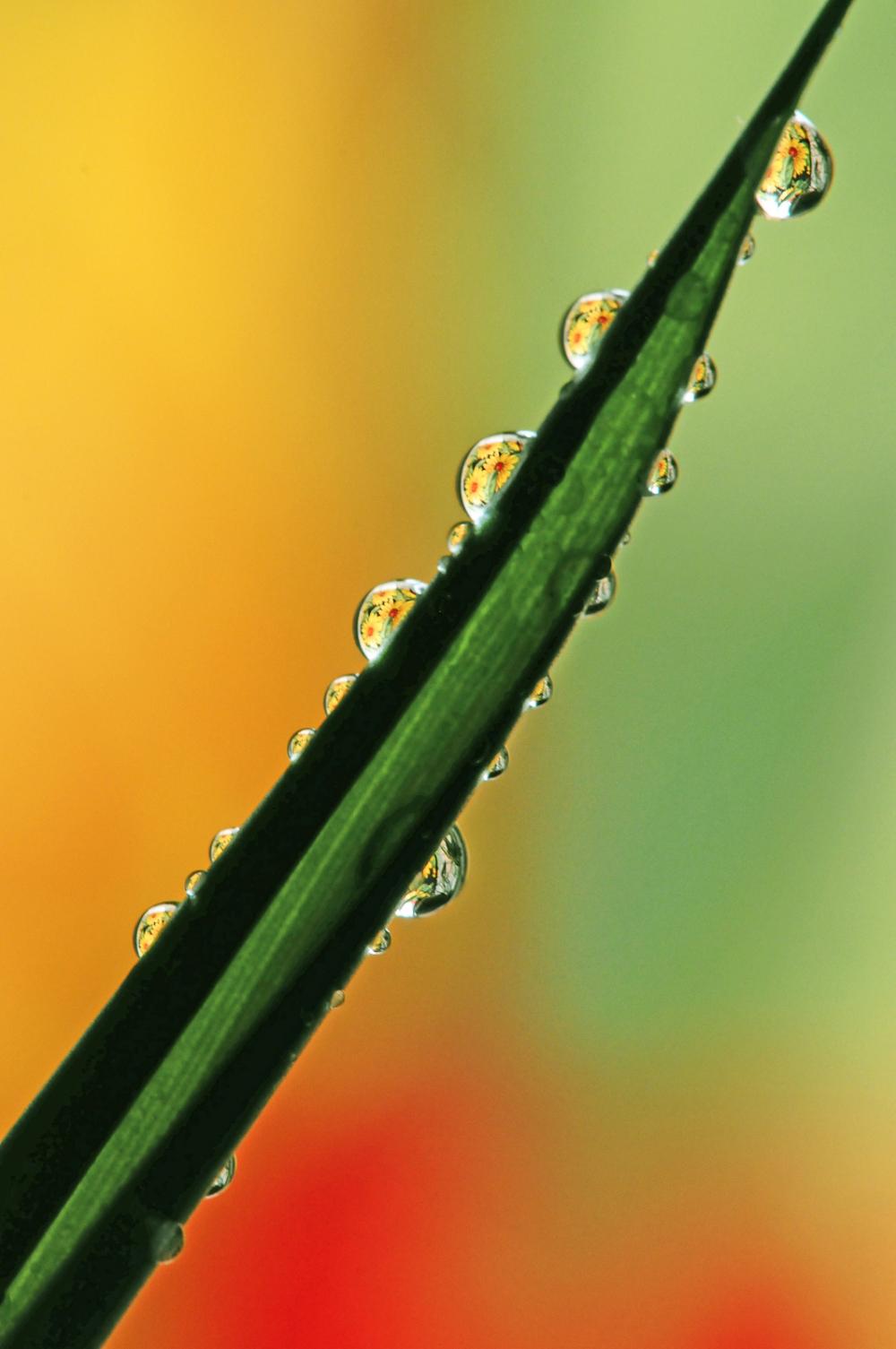 Drops show you