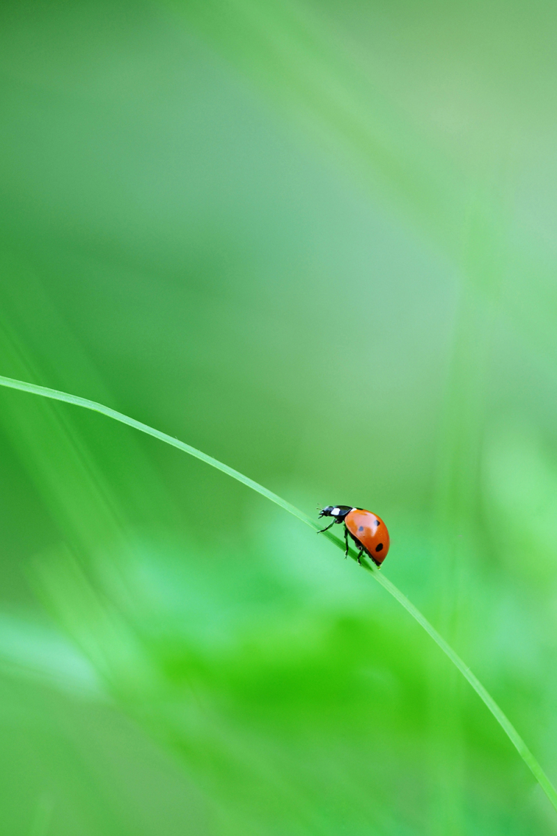ladybug on a green bridge