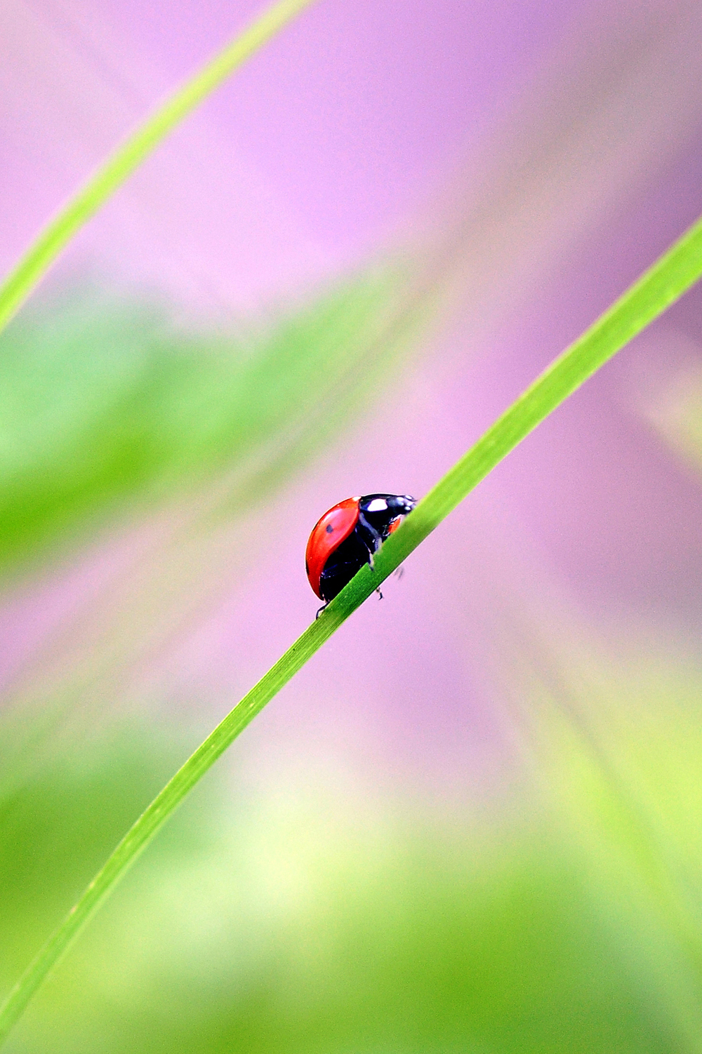 The hungry ladybug   2