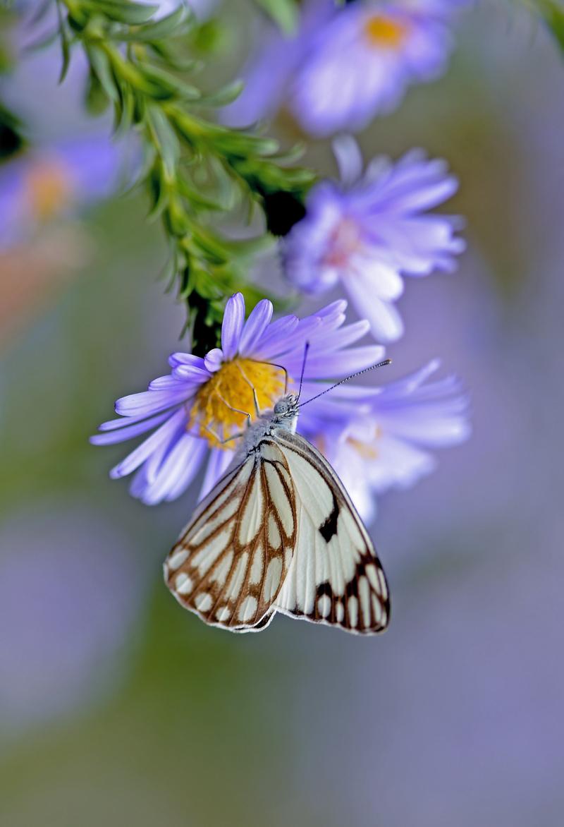 Saina on the flower-3