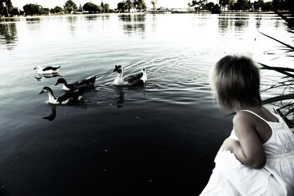 Young girl watching ducks at a lake