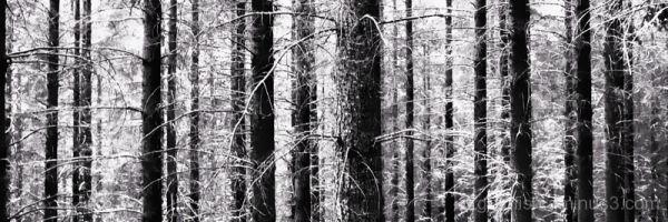 Natures Barcode