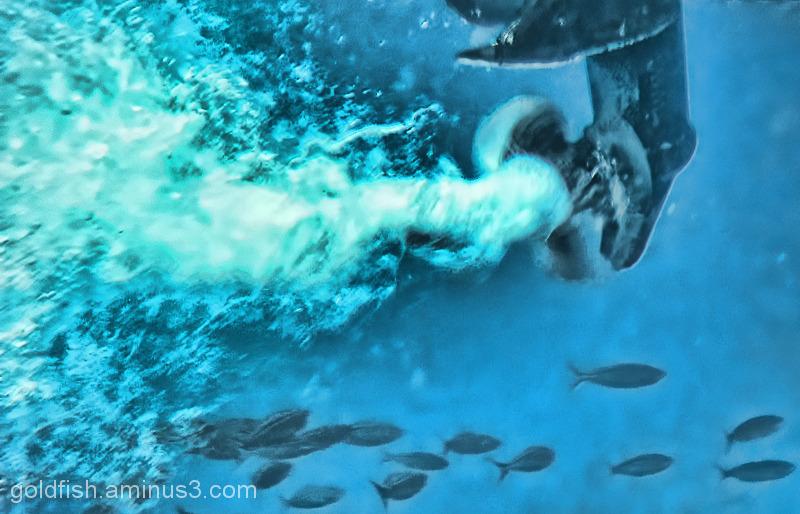 """Underwater Life - 1/5 """"The Vortex"""""""