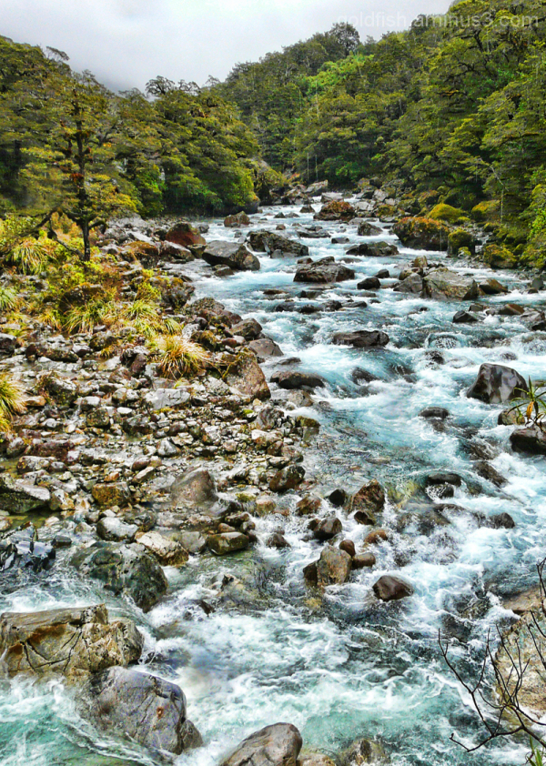 Road To Milford 12/14 - Hollyford River 1