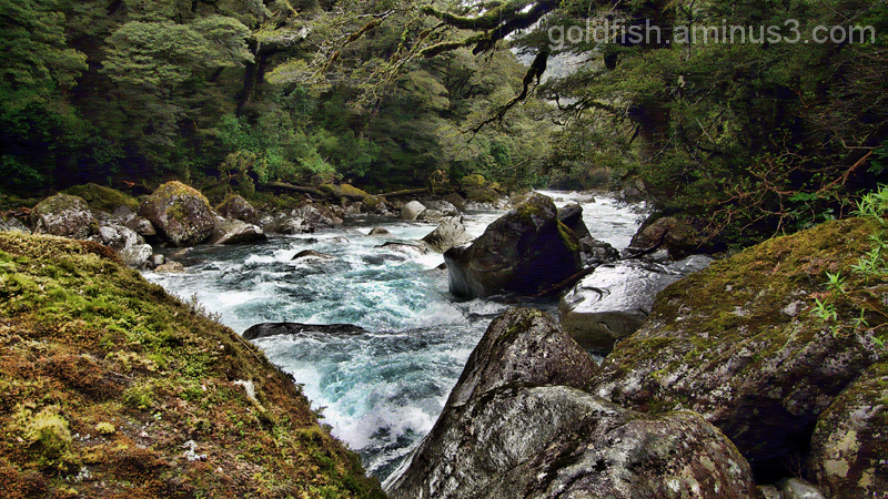 Road To Milford 13/14 - Hollyford River 2