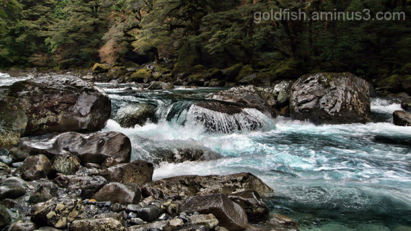 Road To Milford 14/14 - Hollyford River 3