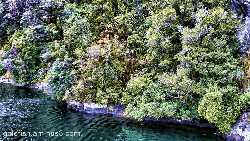 Piopiotahi - Milford Sound 4/18