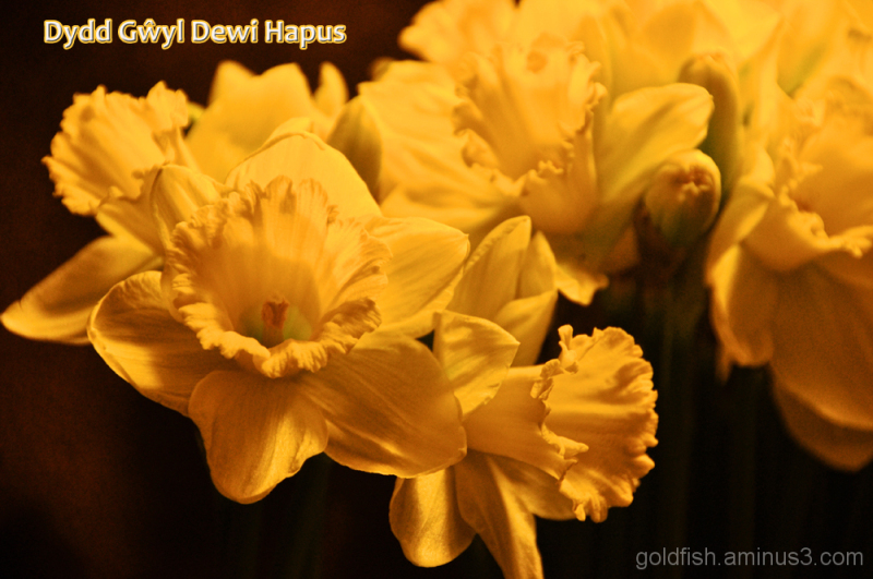 Dydd Gŵyl Dewi Hapus ~ Happy Saint David