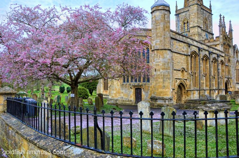 Cherry Blossom and St John the Baptist, Burford