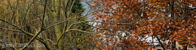 Autumnal Views 1/7