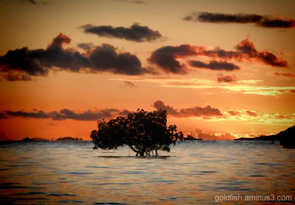 Fiji Sunsets 4/4