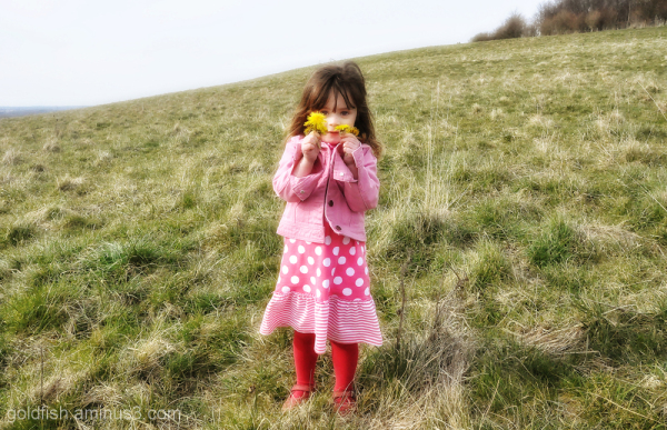 Wittenham Clumps - The Florist
