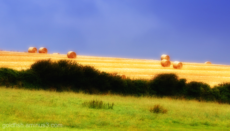 Golden Bales