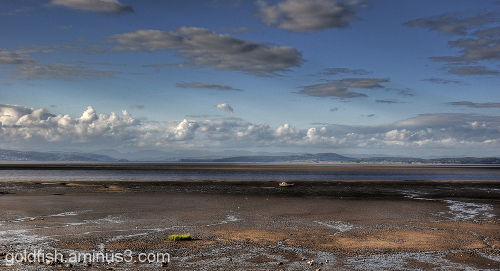 Morecambe Bay 2/6
