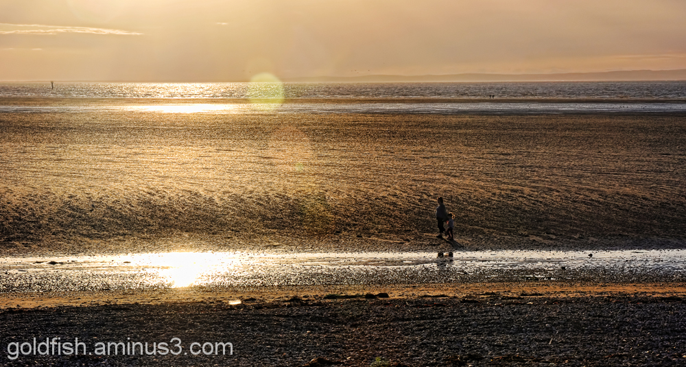Morecambe Bay 4/6