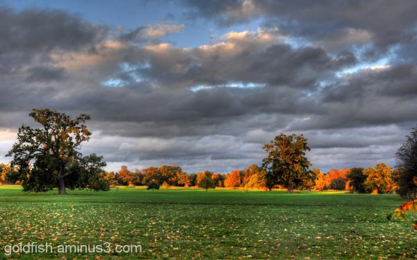 Autumn Colours @ Blenheim 3/12