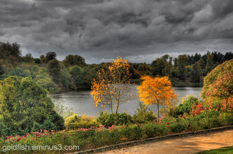 Autumn Colours @ Blenheim 5/12