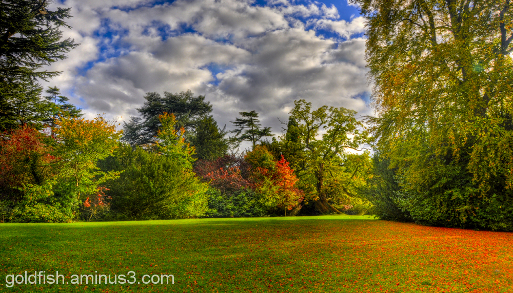 Autumn Colours @ Blenheim 12/12