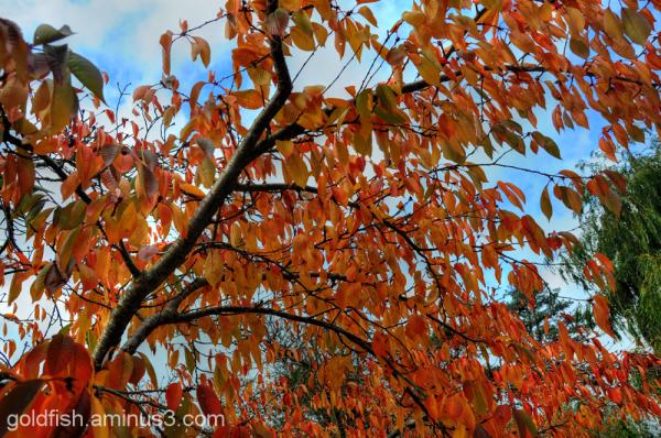 More Autumn Colours 1/3