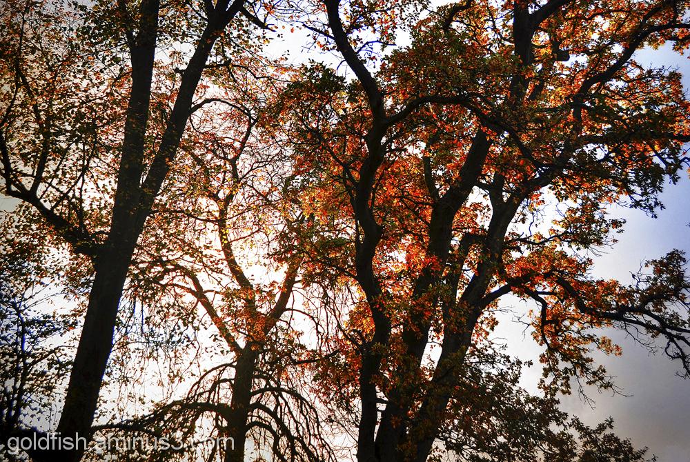 More Autumn Colours 3/3