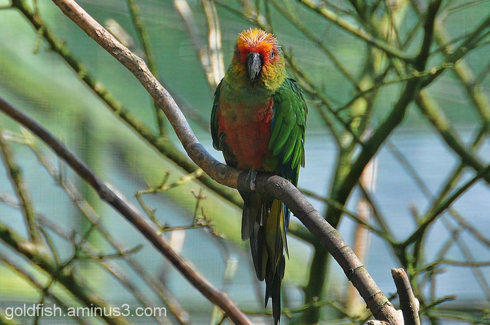 ? Parrot 1/2