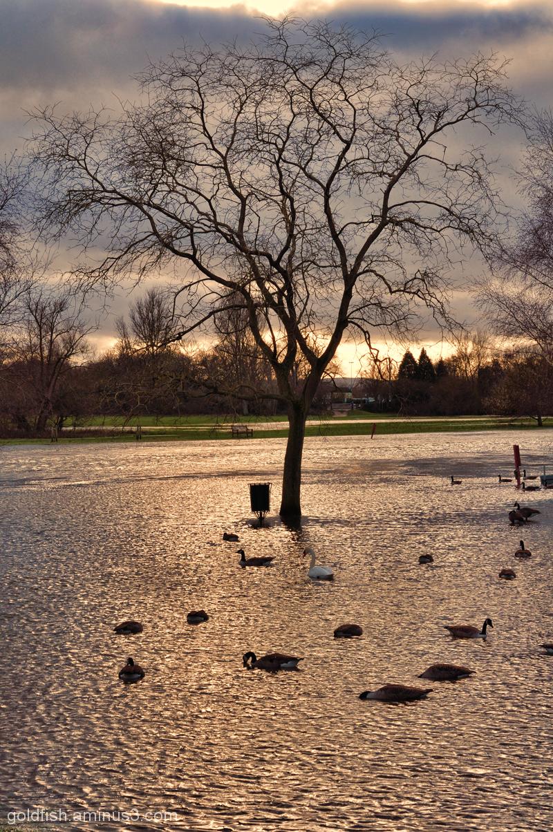 River Thames New Year Flood Alert 3/4