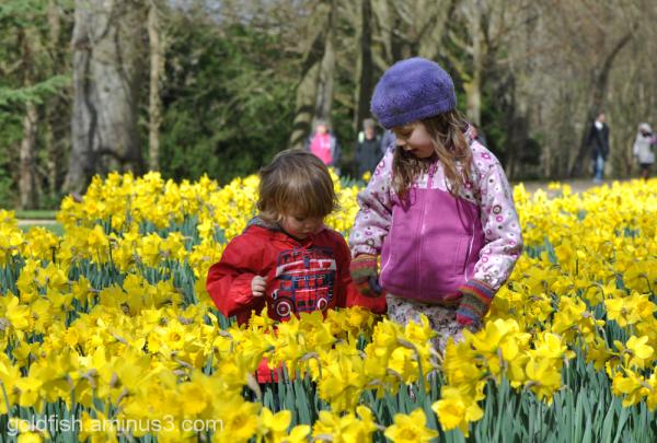 Daffodils 4/4